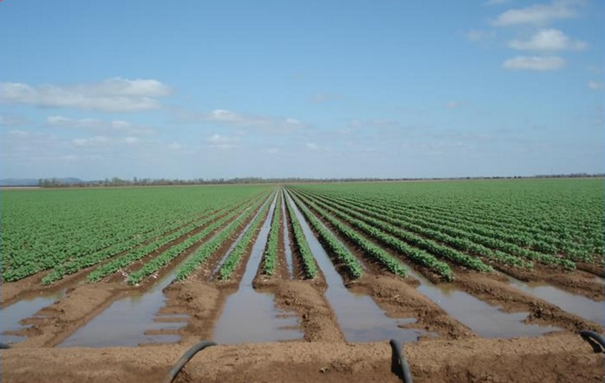 Potential exists to double the current 780ha of irrigation on Lynora Downs, near Rolleston