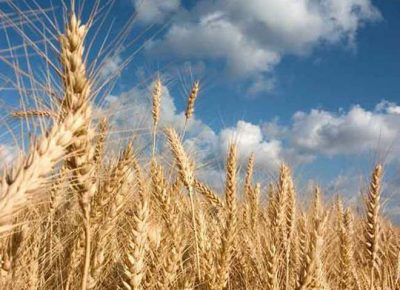 Grain exports from Russia are expected to increase 60pc by 2030.