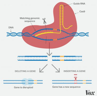 a brief look at genome editing Genome editing, or genome editing with engineered nucleases (geen) is a type of genetic engineering in which dna is inserted, replaced, or removed from a genome using artificially engineered nucleases, or molecular scissors.